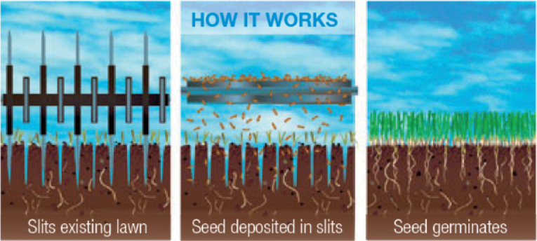 NH & MA Aeration - Over Seeding / Slice Seeding